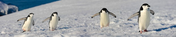 Small penguins seen on land from a small ship in Antarctica.
