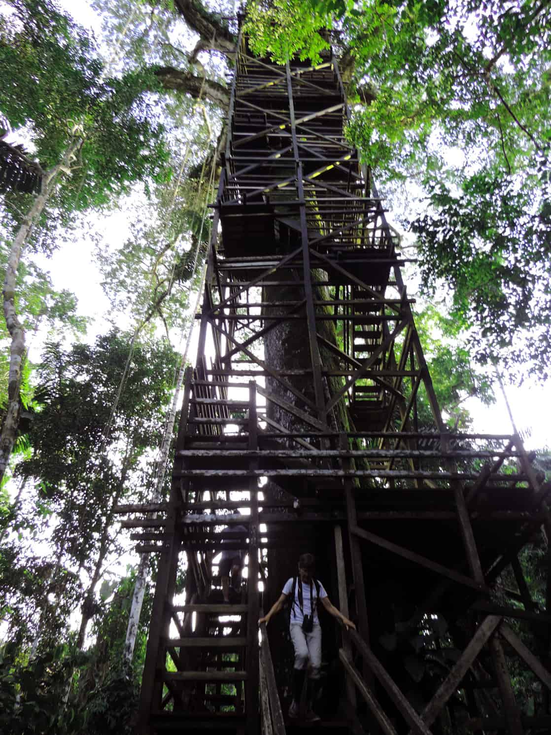 Wooden staircase to the suspended bridge with a Amazon traveler walking down in the jungle.