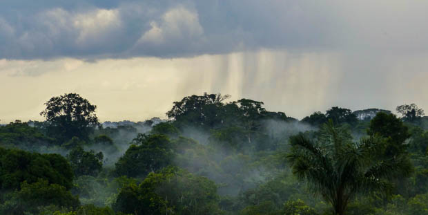 View from above the Ecuadorian jungle with rain falling in the distance.