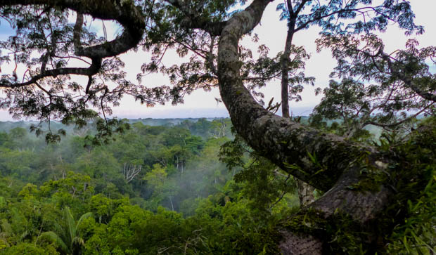 View of the mist through the trees in the Ecuadorian Amazon jungle.