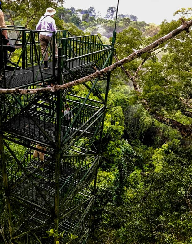 People walking up the canopy tower to view the Ecuadorian Amazon jungle from above.