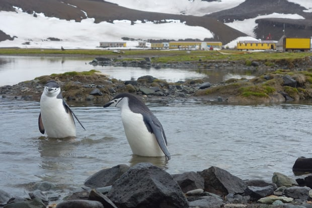 Penguins standing in water in Antarctica with a research station in the background.