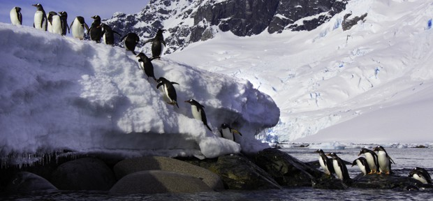 Line of penguins climbing up rocks from the water and onto the snow seen from a kayaking tour in Antarctica.