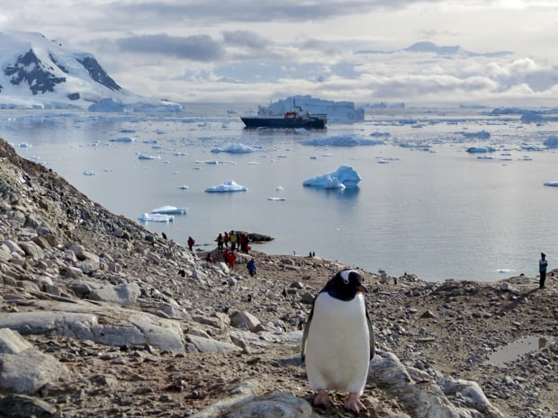 People hiking close to penguins with their small ship in the background among icebergs.