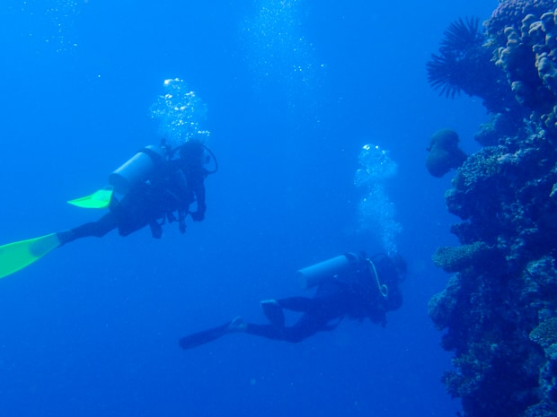 Two scuba divers swimming along a shelf in the Great Barrier Reef with various corals growing.
