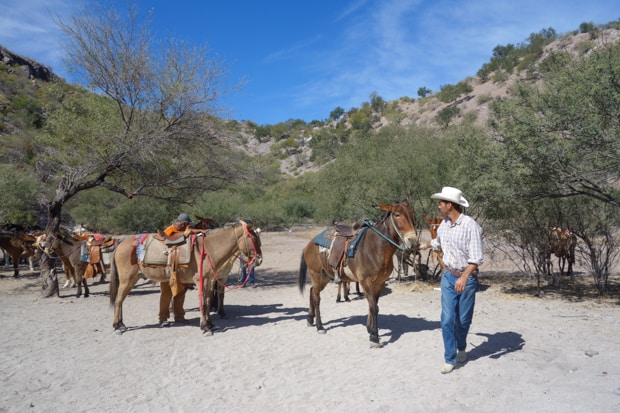 Mexican cowboy leading a heard of horses and donkeys on a beach in Baja.