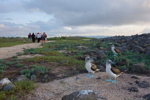 Group of Galapagos travelers on a hiking trail huddled together with 3 Blue Footed Boobies looking away.