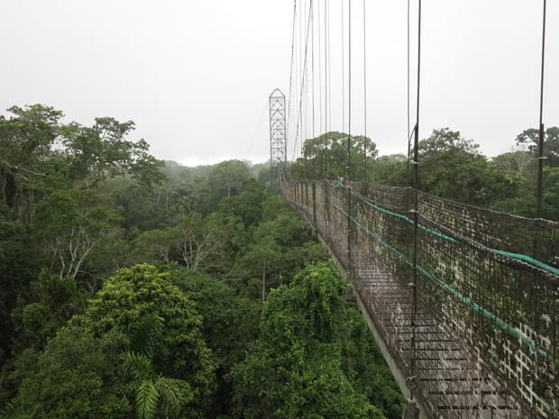 View of a suspended walking bridge sitting on top of a rainforest canopy in the Ecuadorian Amazon jungle.