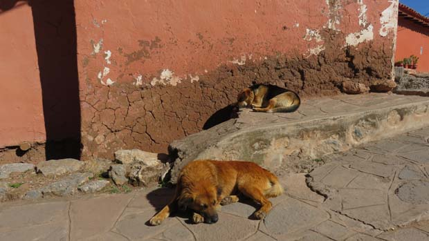 2 sleeping dogs on a cobbled sidewalk in a Peruvian village.