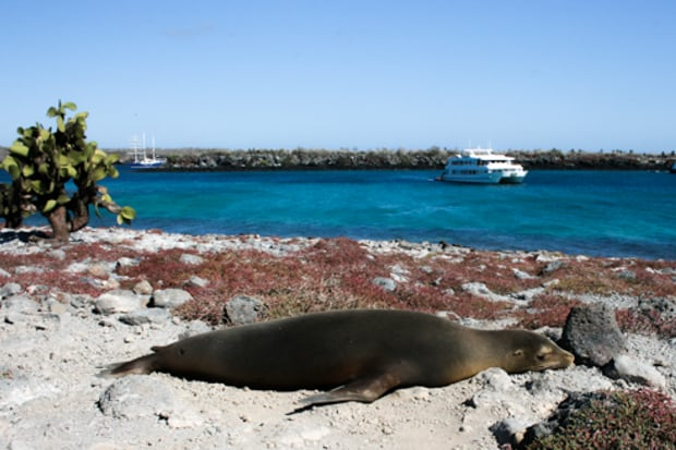 A lounging sea lion on the beach with a Galapagos small ship in the background