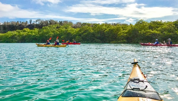 The tip of a kayak approachers other kayakers and a mangrove shore in the Galapagos