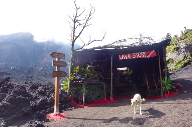 Lava Store and Cantina shack off the side of the road next to volcanic rock and signs pointing in different directions with a white dog in front.