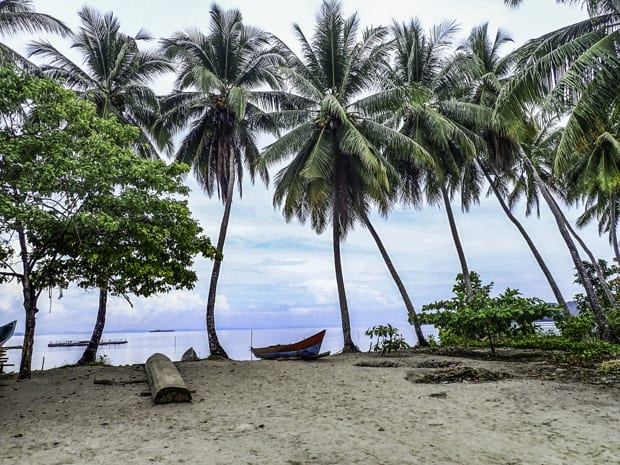 A row of palm treas and a canoe on a beach in Indonesia.