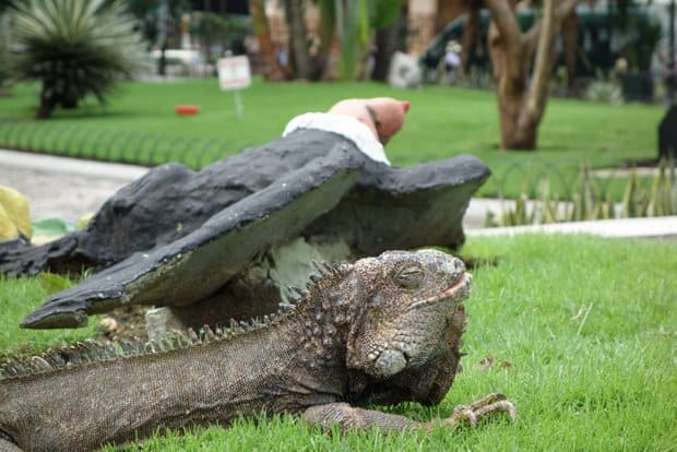 Land iguana sleeping on the grass next to a statue of a vulture in the Guayaquil city park.