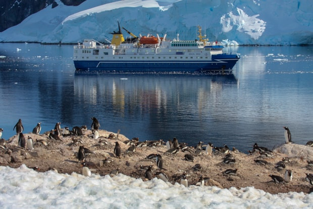 View from hiking tour of penguins and small expedition cruise ship in the bay in Antarctica.