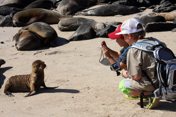 2 young boys on a sandy beach filled with sea lions and 1 young pup posing for a picture.