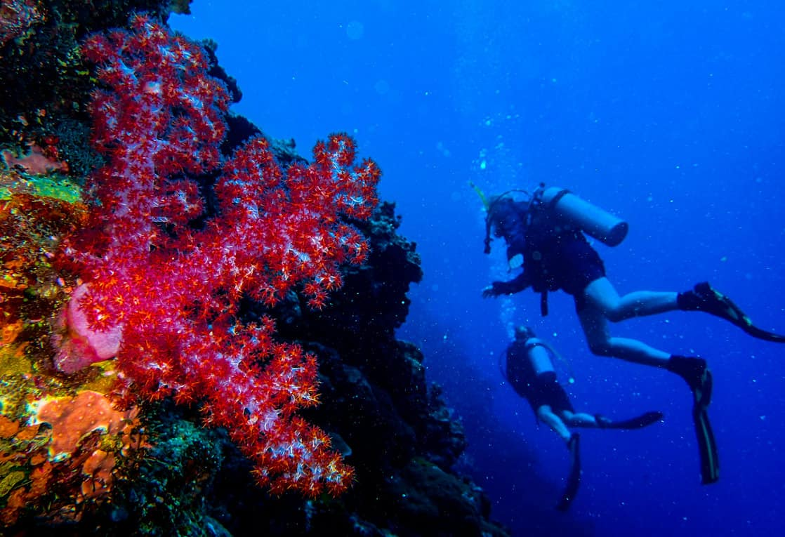 Scuba diving excursion from a small ship cruise in the south pacific islands with people next to colorful coral.