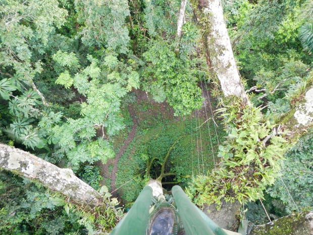 Downward view from the top to see the green jungle canopy and floor.