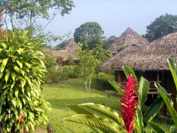 A view of La Selva EcoLodge with thatched roofed huts in a garden.