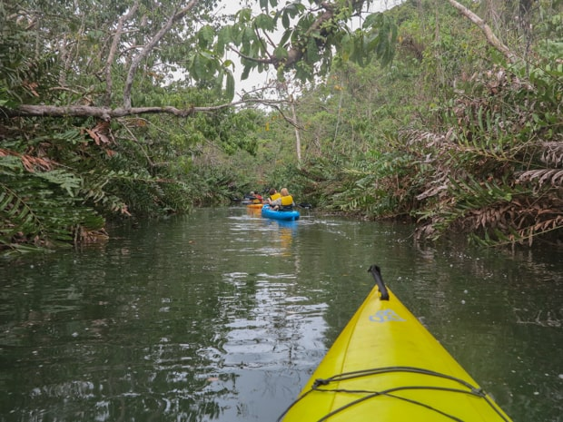 Guests on a small ship cruise tour kayaking in the jungle in Panama.