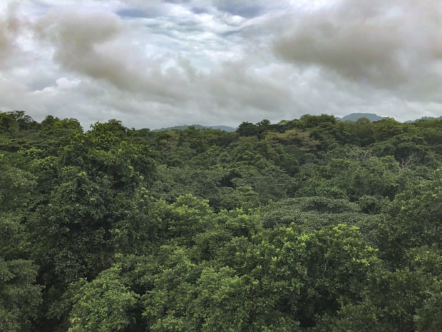 View from above the canopy on a tour in the Gamboa rainforest of panama.