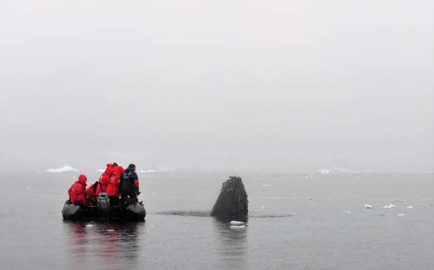 Whale's head out of the water next to a skiff with guests from a small ship cruise in Antarctica.