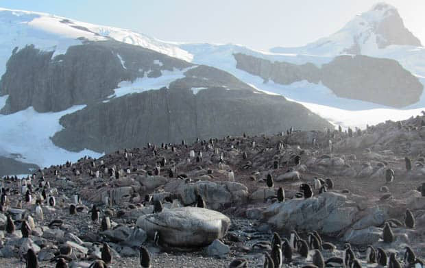 Large group of penguins on land in Antarctica.