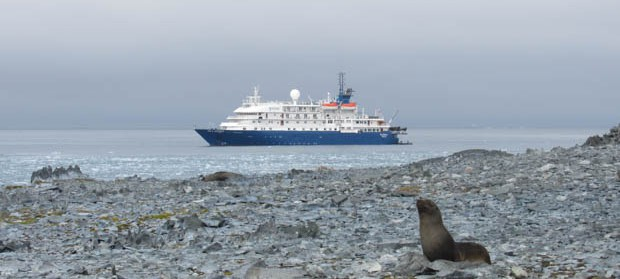 Small expedition ship in Antarctica with seal on rocky beach in front.