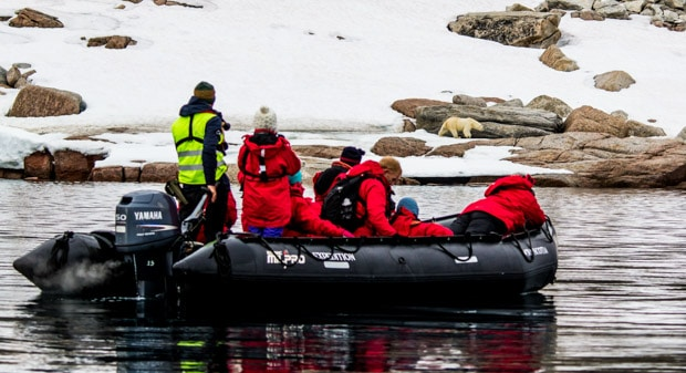 A group of people on a motorized raft looking at a polar bear