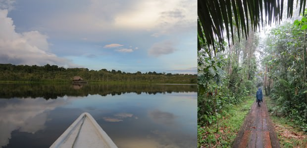 The tip of a small boat floating on a lagoon and a traveler walking on a boardwalk in the Ecuadorian Amazon jungle.