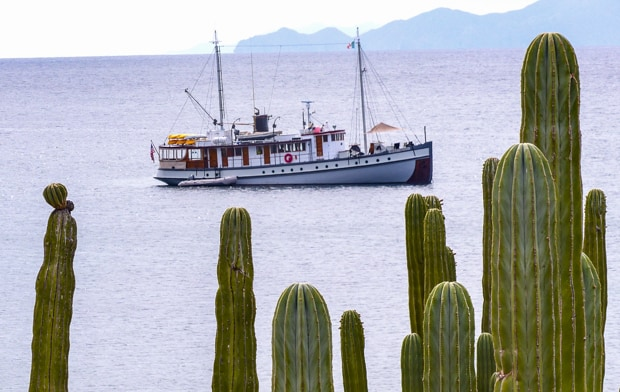 Westward small ship cruise anchored in Baja with Cardon cactus.