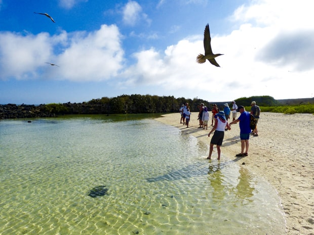 A group of Galapagos travelers on a sandy shoreline with sea birds flying above their heads on a Galapagos island.