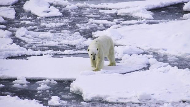 Polar Bear on an Arctic Iceberg