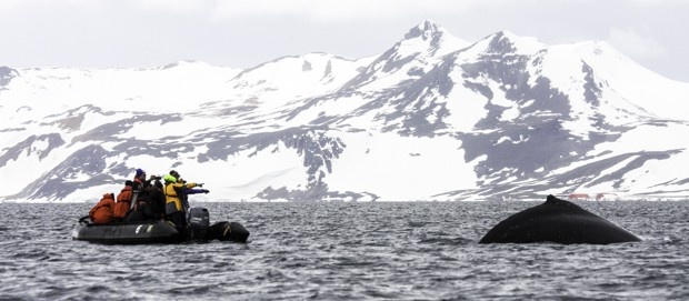 Guests on a skiff excursion from their small ship cruise up close to a breaching whale in Antarctica.