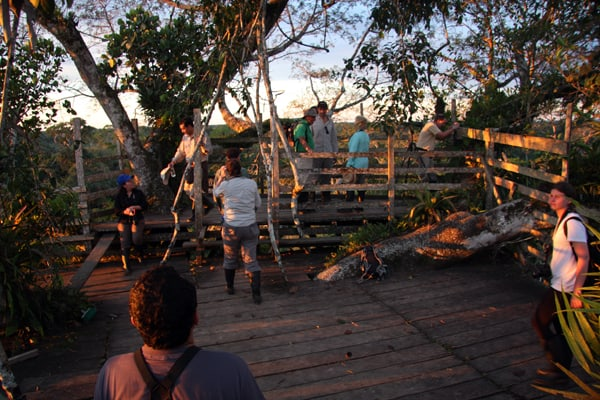 A group of people at the top of a canopy tower in the Ecuadorian Amazon jungle.