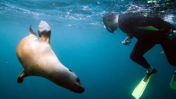 man snorkeling with a sea lion in baja