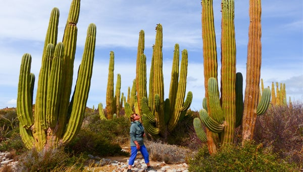 A solo female traveler stands among giant green cacti in Baja