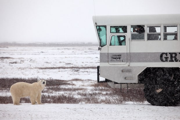 A polar bear looks up at an Arctic rover with travelers inside