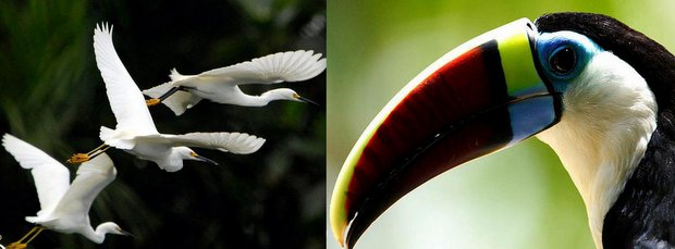Amazon bird species seen on excursions from a small ship river cruise.