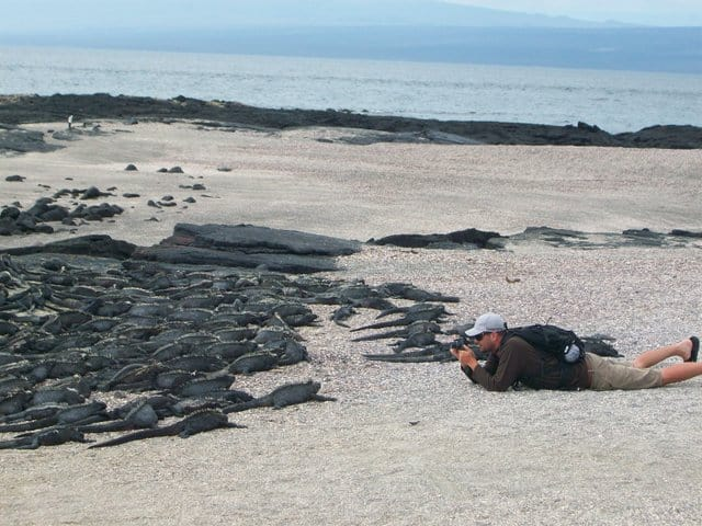 A very large group of Galapagos marine iguanas and a traveler photographing on a sandy beach.