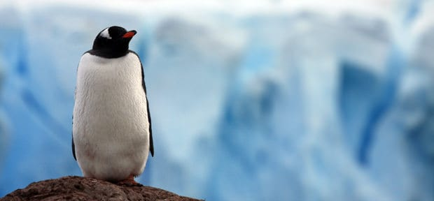 Penguin on top of rock in Antarctica with ice in background.