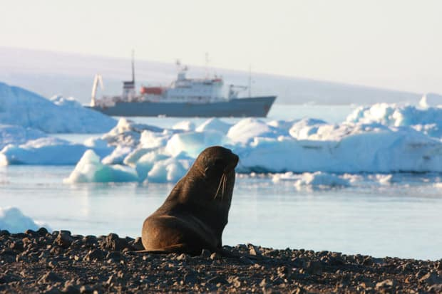 Seal on rocks in Antarctica with small expedition cruise ship in background.