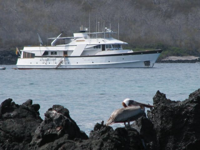 Small ship cruise the Beluga anchored off the coast with a pelican on volcanic rock in the Galapagos.