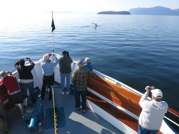 Guests on the bow of a small ship cruise in Alaska taking pictures of a whale breaching nearby.