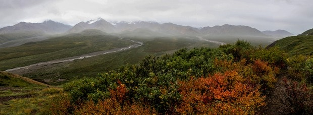 Wildflower and mountain range in a misty setting in Alaska.