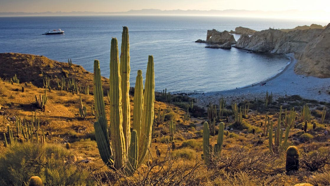 cactus in the foreground with a small ship in the background in Baja