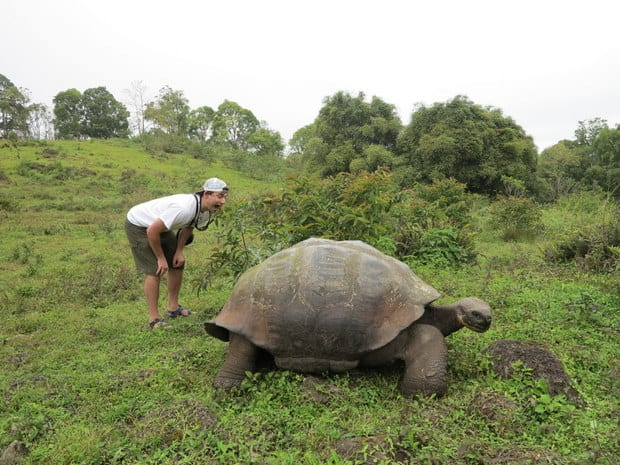 Traveler leaning over a giant land tortoise in a grassy field in the Galapagos.