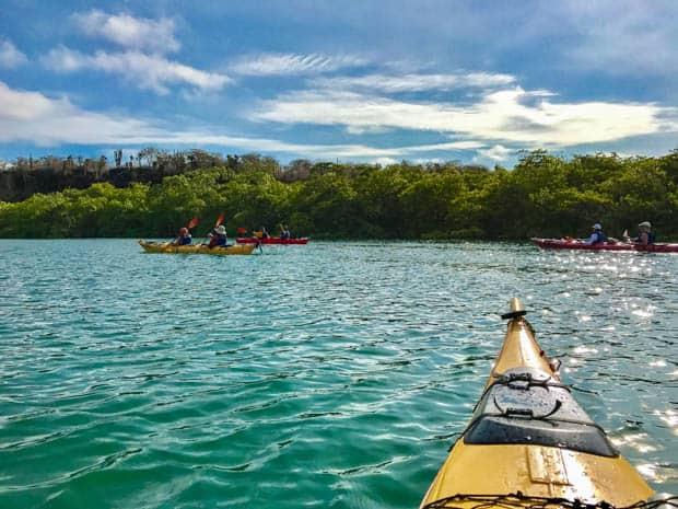 Group of travelers kayaking in the ocean.