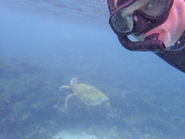 Galapagos traveler swimming next to a green sea turtle.
