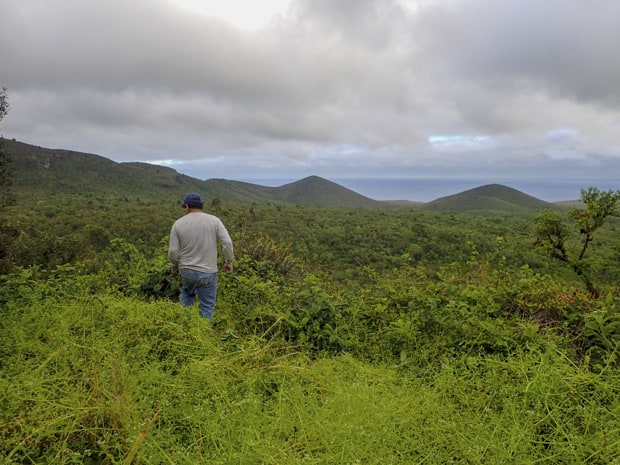 A man walking on a trail with green shrubbery.